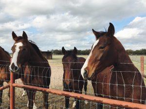 Weterynarz dla koni