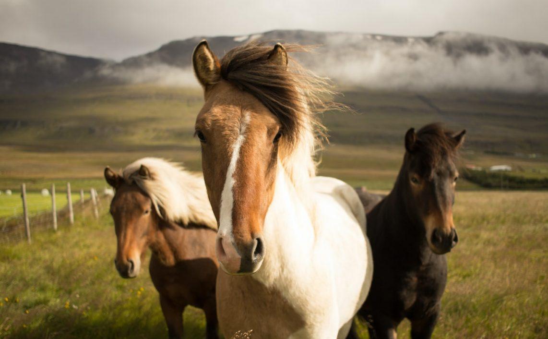 Weterynarz dla konia